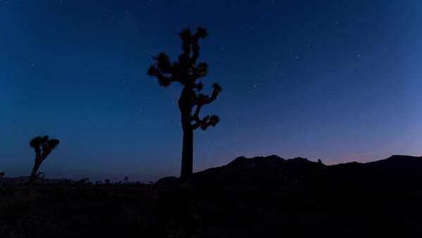 Timelapse footage of Joshua Tree National Park, California, USA. Rights-managed stock video