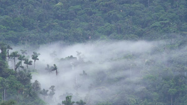 Mist over the rainforest. Alto Coca, Ecuador. Rights-managed stock video