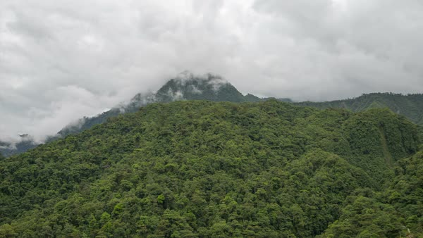 Timelapse of clouds moving over the rainforest. Rights-managed stock video