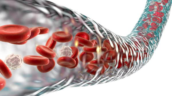 Animation of red and white blood cells flowing through a ...