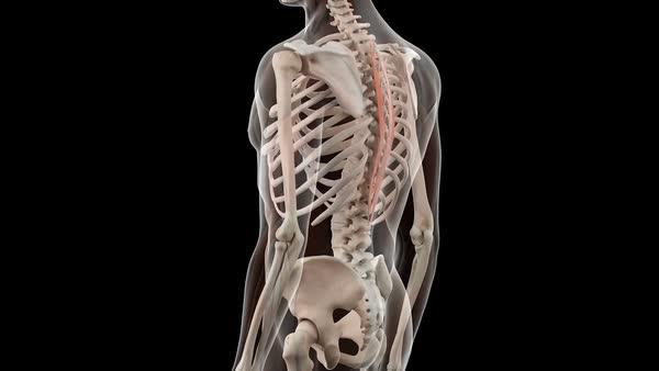 Human skeleton rotating against a black background, showing