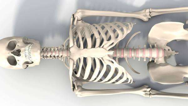 human skeleton walking - stock video footage - dissolve, Skeleton