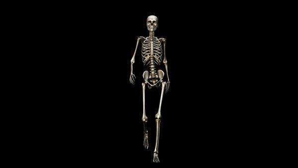 computer animation of the male skeletal system walking on a black, Skeleton