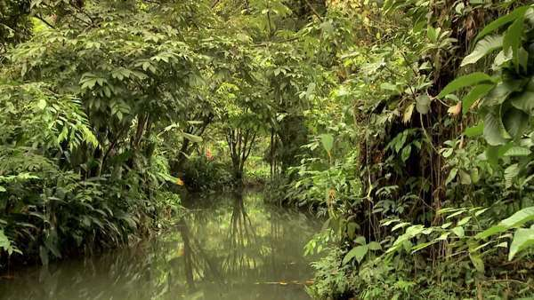 POV through a river in a rainforest Rights-managed stock video