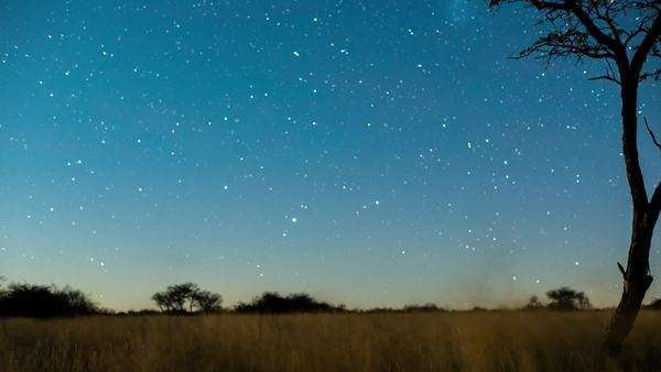 A linear timelapse of a dark landscape scene and a silhouetted Acacia Tree with stars twisting through, the moon rises to light up the landscape Royalty-free stock video