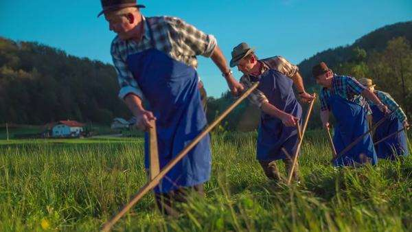 Farmers moving in the line when mowing on traditional way Royalty-free stock video