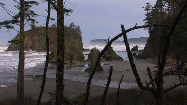 A pretty shot of the Oregon coastline Royalty-free stock video
