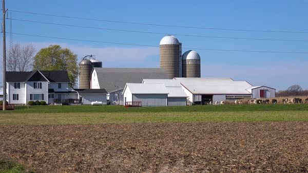 Wide shot of a Wisconsin dairy farm as cows enter the barn. Royalty-free stock video