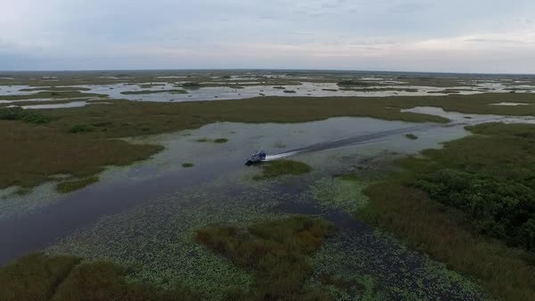 A beautiful aerial shot over an airboat traveling through the Everglades in Florida. Royalty-free stock video