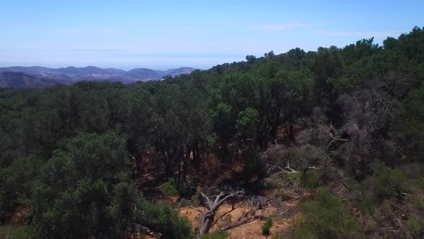A beautiful aerial shot over the tops of the Santa Ynez Mountains near Santa Barbara reveals the Pacific Ocean distant. Royalty-free stock video
