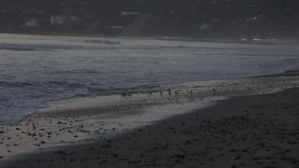 Locked off shot showing seabirds and a sandy beach Royalty-free stock video