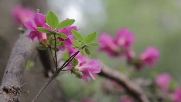 Static shot of beautiful pink flower growing on a branch Royalty-free stock video