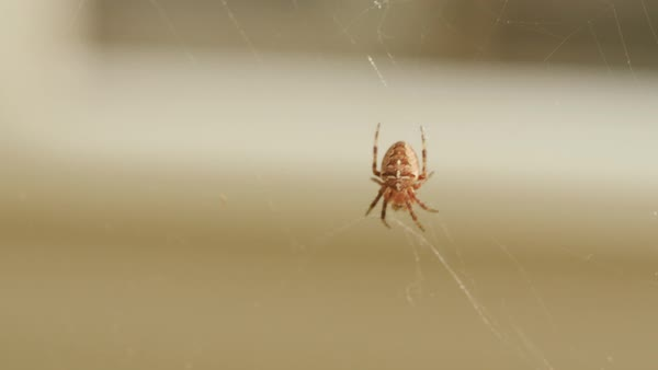 Spider on web Royalty-free stock video