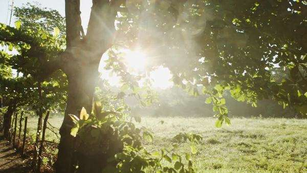 Lens flare from morning sun with horse grazing in pasture Royalty-free stock video