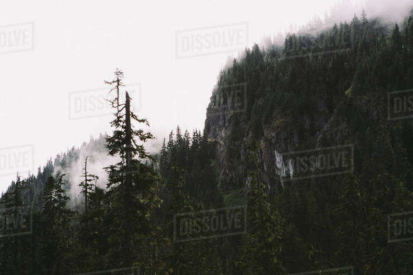 Fog rises among the tree covered cliff Royalty-free stock photo
