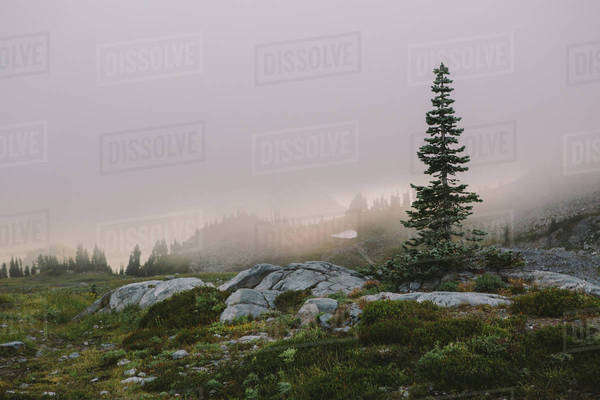 A lonely tree in front of cloud covered mountains Royalty-free stock photo