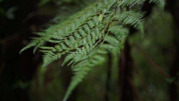 Ferns Royalty-free stock video