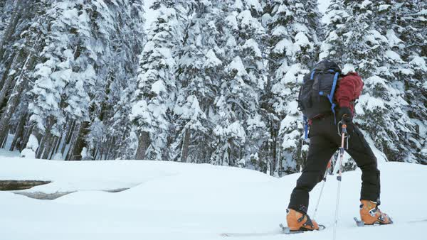 Low-angle shot of a man ski mountaineering in a snow covered forest Royalty-free stock video