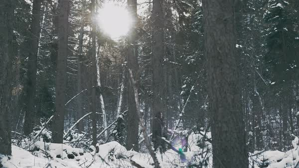 Tilt-down shot of a young woman wandering in a snow covered forest Royalty-free stock video