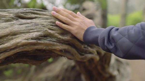 Man's hand grazes the length of a tree as he explores a forest, slow motion Royalty-free stock video