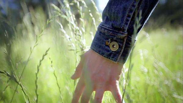 Close up of a girl's hand feeling tall grass between her fingers. slow motion. lens flare Royalty-free stock video