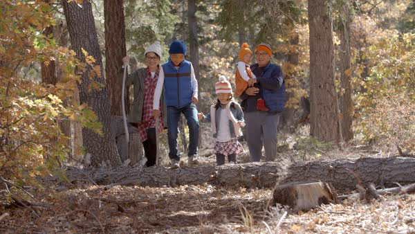 Parents with children enjoying a hike together in a forest Royalty-free stock video