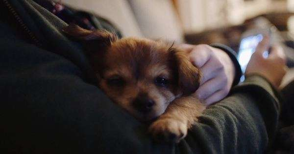 Puppy sleeping on its owner Royalty-free stock video