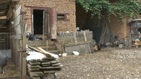 Pan shot of a village yard with animals and poultry walking freely around. Royalty-free stock video