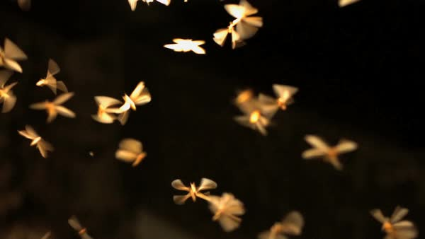 Swarm of insect species with wings illuminated by natural light at night in tropical jungle environment Royalty-free stock video