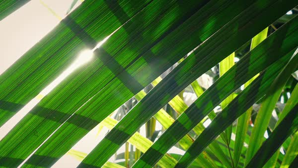 Moving under layers of jungle plants Royalty-free stock video