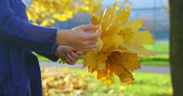 Girl admiring golden leaves she collected on sunny autumn day Royalty-free stock video