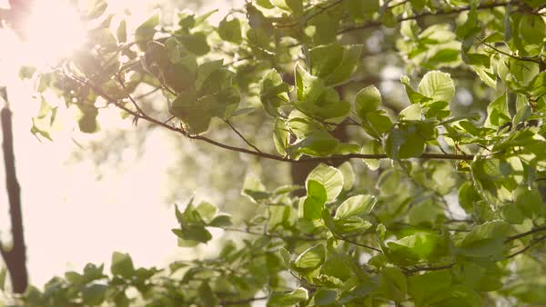 Green leaves on lush tree branches in young forest swaying in summer breeze Royalty-free stock video