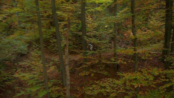 Aerial of Downhill biker in autumn forest Royalty-free stock video