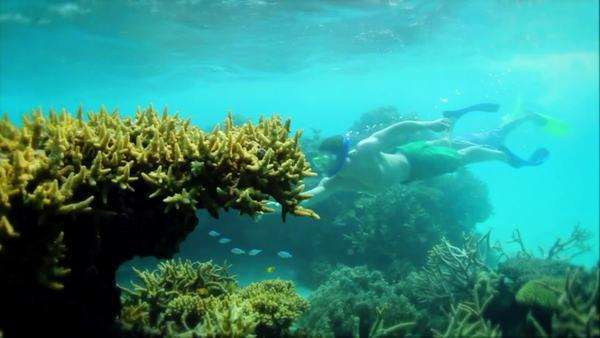 Handheld shot showing divers exploring the coral reef ecosystem Rights-managed stock video