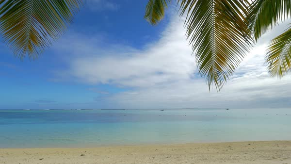 Tropical scene with empty beach quiet clear water of the ocean and green palm branches Royalty-free stock video