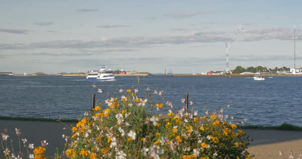 Touristic ship, boat and cutter sailing in the harbour of the city, bush of flowers in foreground Royalty-free stock video