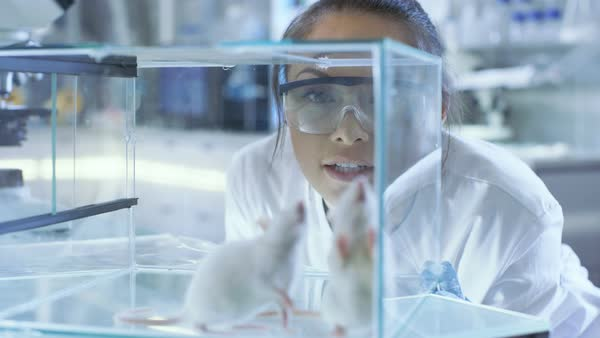 Medical research scientists examines laboratory mice kept in a glass cage Royalty-free stock video