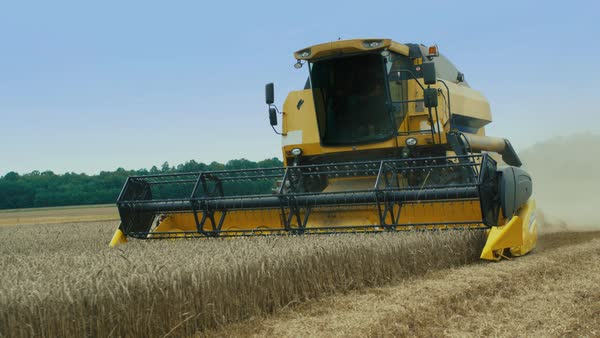 Combine harvester working on wheat field Royalty-free stock video