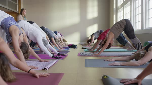 Medium slow motion zoom in shot of yoga class performing downward-facing dog Royalty-free stock video