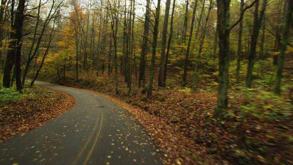 POV driving tree lined rural road, fall, West Virginia USA Rights-managed stock video