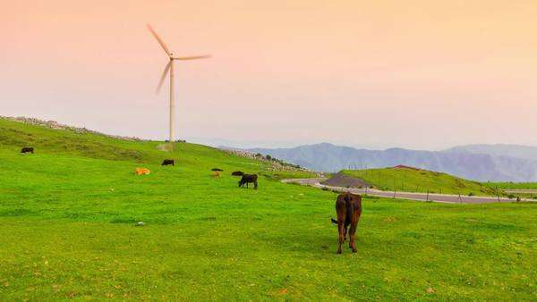 Cows graze while the windmills turn. Timelapse at sunset Royalty-free stock video