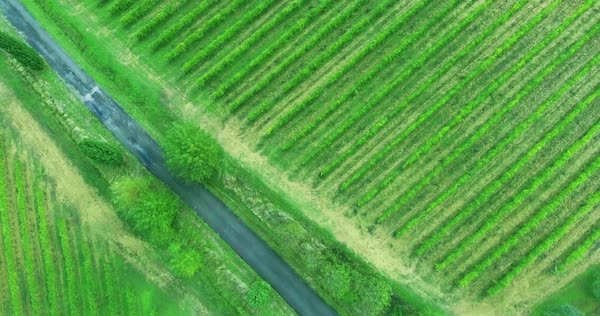 Birds eye view at Toscana vineyard with a lonely road between. Italian landscape from above. Royalty-free stock video