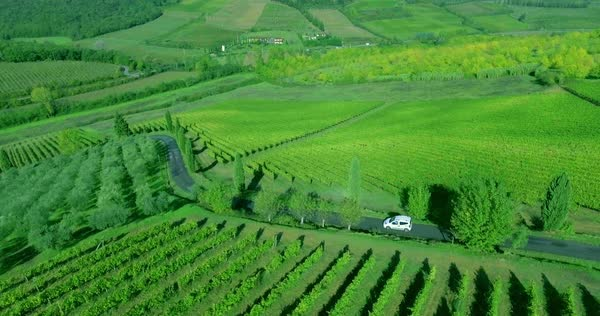 Flight over vineyard rows in Toscana to green hills. A small white car drives down the road. Royalty-free stock video