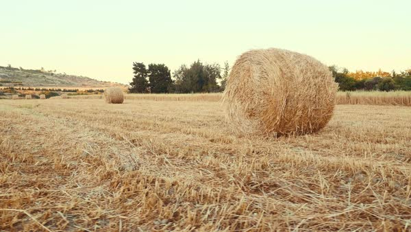 Tracking shot hay bales lie on the harvested field Royalty-free stock video