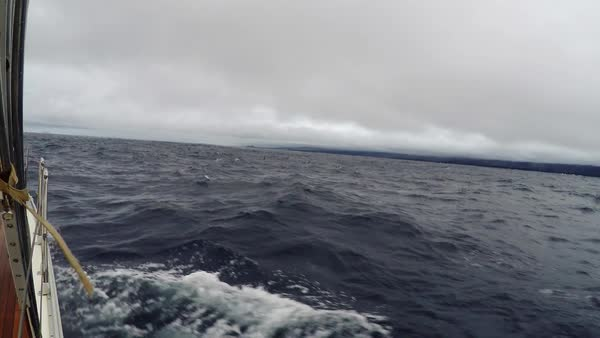 Yacht walk in the wind in overcast weather. A flock of dolphins swimming and jumping in deep blue sea, ocean, near a sailing yacht Royalty-free stock video