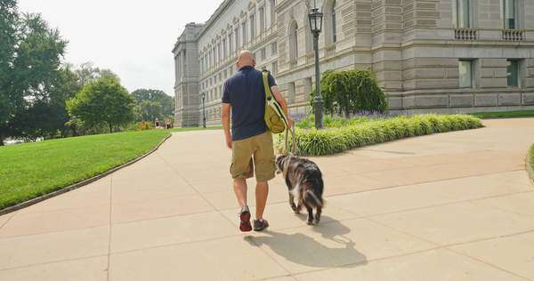 A man walks his dog near the Library of Congress in the Capitol Hill district of Washington, D.C. Royalty-free stock video