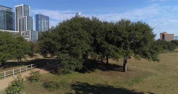 A dramatic rising aerial view revealing the Austin city skyline as seen from Vic Mathias Shores Park on a late Autumn sunny day.   Royalty-free stock video