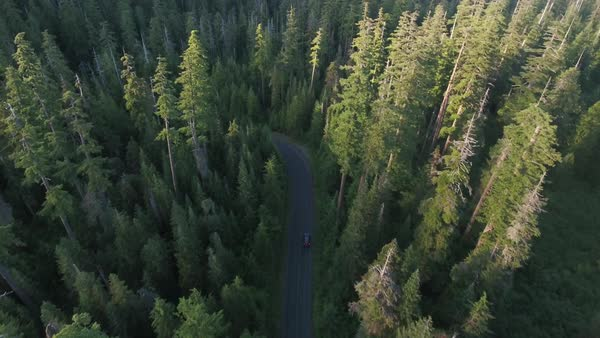 Car traveling through forest aerial Rights-managed stock video
