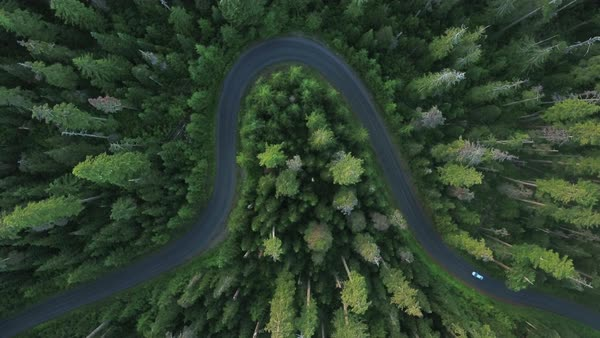 Car traveling through forest birds eye aerial Rights-managed stock video