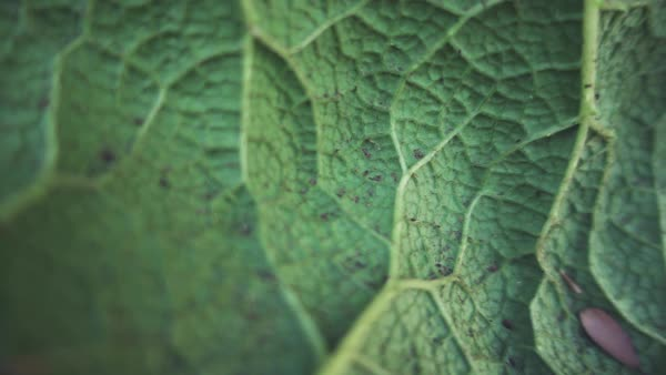 Close-up macro plant veins abstract slow motion Rights-managed stock video